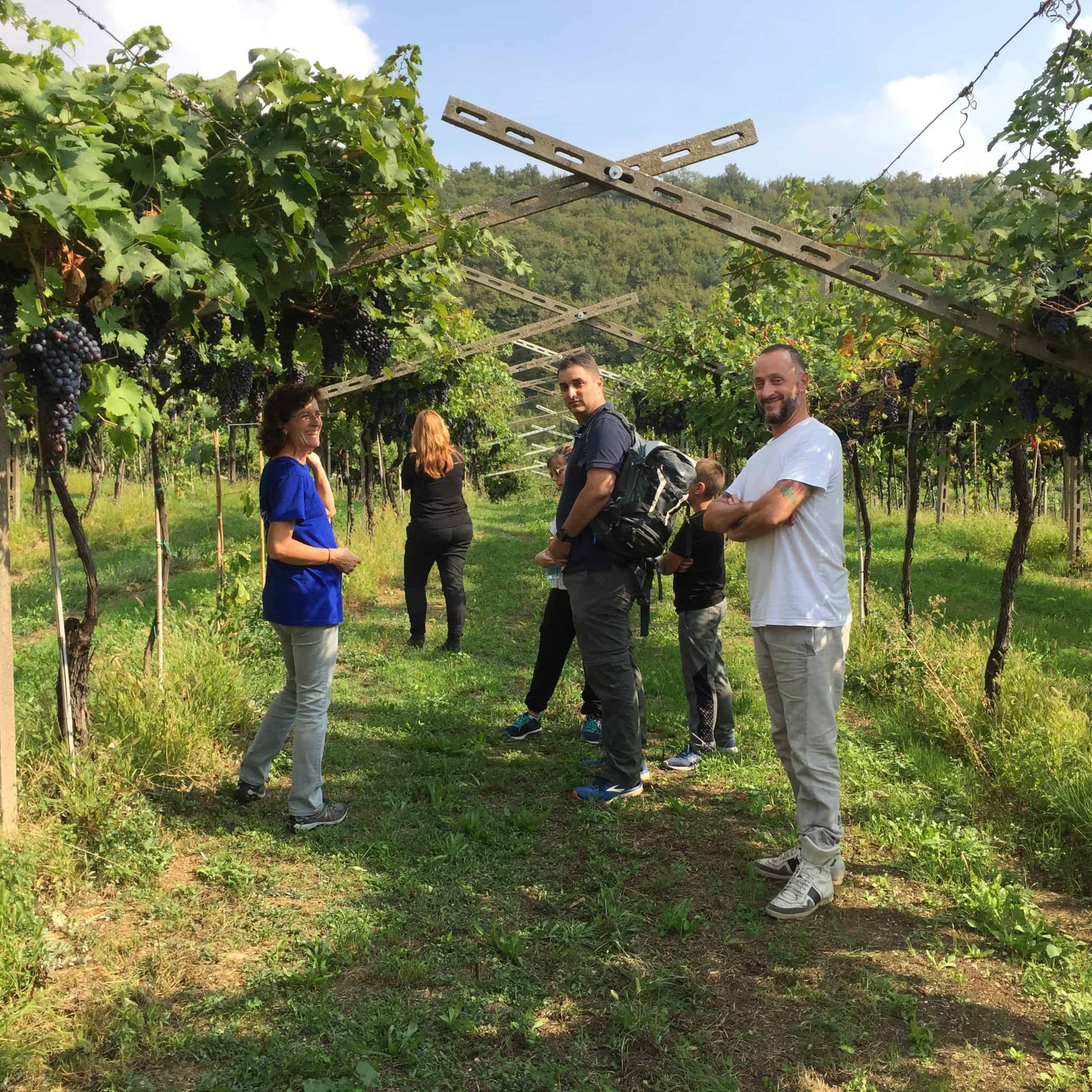 Amarone Wine Tour