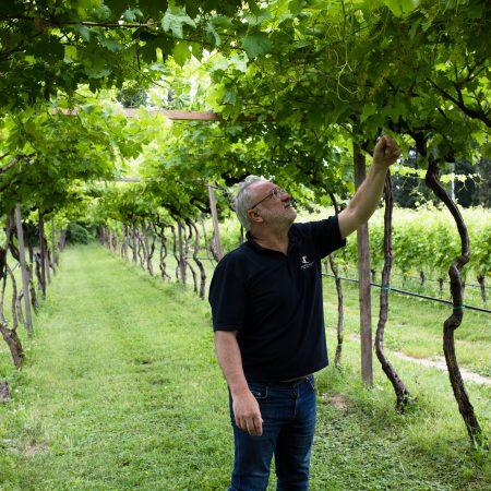 Garda Lake Wine Tasting