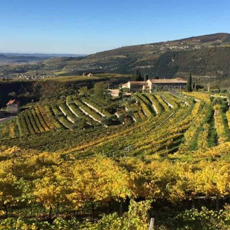 valpolicella vineyards in Marano